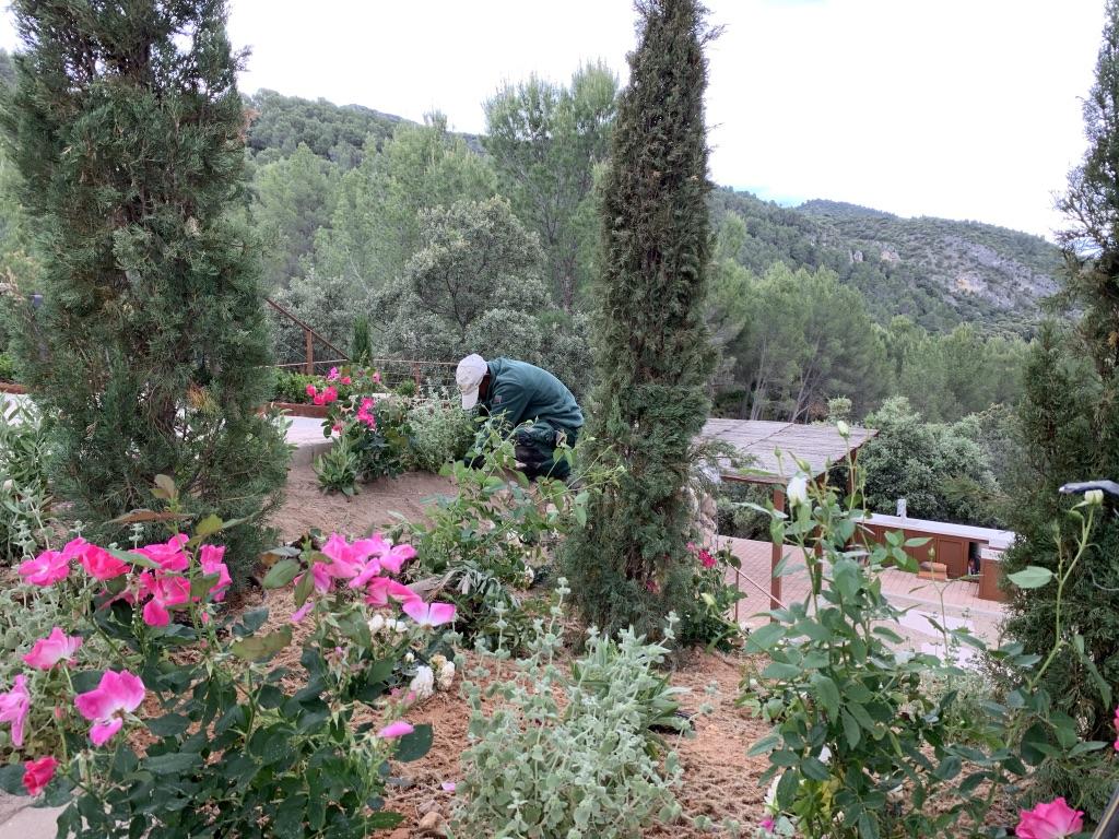 Servicios de jardinería 2